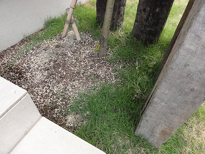 紅葉部分 芝生の侵食状況