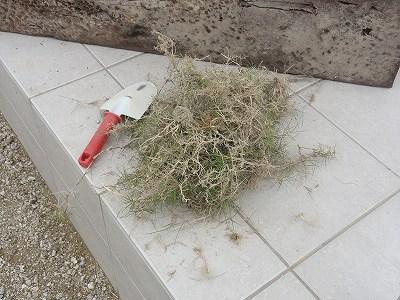 取り除いた芝生