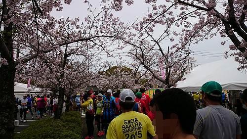 さが桜マラソン2016 総合体育館の桜