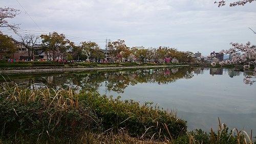 さが桜マラソン2016 佐賀城 お堀